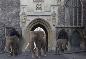 st john gate elephants (2).jpg